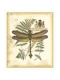 Regal Dragonfly III Prints by  Vision Studio