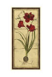Amaryllis Panel I Posters by  Vision Studio