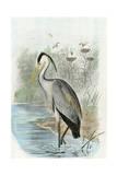 Oversize Common Heron Posters