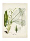 Tropical Grass II Kunstdrucke von  Vision Studio