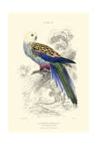 The Naturalist's Library IV Prints by W.h. Lizars