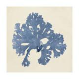 Chromatic Seaweed V Kunstdrucke von  Vision Studio