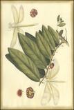 Floral Fantasia V Posters