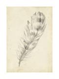 Feather Sketch II Reproduction giclée Premium par Ethan Harper