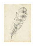 Feather Sketch II Premium Giclee Print by Ethan Harper