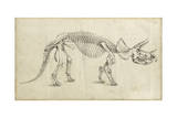 Dinosaur Study II Reprodukcje autor Ethan Harper