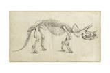 Dinosaur Study II Prints by Ethan Harper