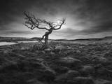 Lonesome Photographic Print by Martin Henson