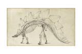 Dinosaur Study III Poster af Ethan Harper