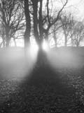Morgenlicht Fotografie-Druck von Martin Henson