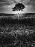 Cracked Earth Photographic Print by Martin Henson