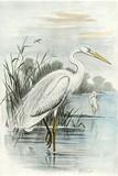 Oversize White Heron Prints