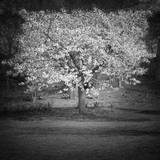 Woodland Tones II Fotografisk tryk af Martin Henson
