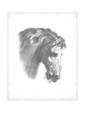 Equestrian Blueprint IV Prints by  Vision Studio