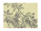 Grey Leaves I Prints by Jennifer Goldberger