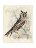 Meyer Long-Eared Owl Posters by H. l. Meyer
