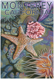 Monterey, California - Tidepool Posters