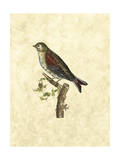 Selby Birds VI Prints by John Selby