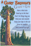 A Giant Sequoia's Guide To Life Posters