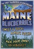Maine Blueberries Photo