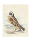 Meyer Hawk Owl Art by H. l. Meyer