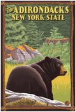 The Adirondacks, New York State - Black Bear In Forest Poster