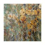 Amber Poppy Field I Posters av Tim O'toole
