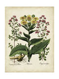 Besler Florilegium I Prints by Basilius Besler
