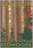 Big Sur, California - Redwoods Posters