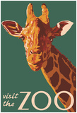Visit The Zoo, Giraffe Up Close Poster