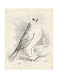 Meyer Snowy Owl Posters by H. l. Meyer