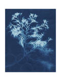 Cyanotype No.4 Prints by Renee W. Stramel