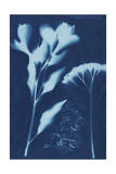 Cyanotype No.15 Posters by Jenna Guthrie