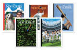 Mark Ulrickson New Yorker Sports Notecard Set Note Card Sets by Mark Ulrickson
