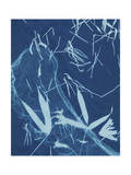 Cyanotype No.5 Posters by Renee W. Stramel