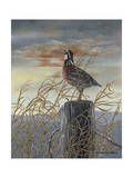 Quail on a Post Posters par Carolyn Mock