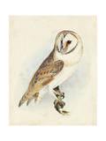 Meyer Barn Owl Prints by H. l. Meyer