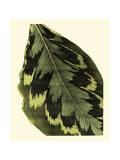 Grandiose Leaves I Kunstdrucke von  Vision Studio