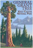 General Grant Tree - Kings CaNYon National Park, California Posters
