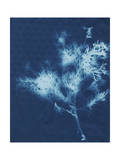 Cyanotype No.3 Posters by Renee W. Stramel