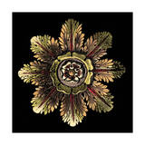 Rosette on Black II Prints by DaCarlo Antonini