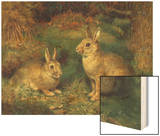 Rabbits Wood Print by Henry Carter