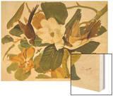 Black-Billed Cuckoo Wood Print by John James Audubon