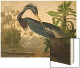 "Louisiana Heron from ""Birds of America"" Wood Print by John James Audubon"