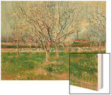 Blossoming Orchard, 1888 Wood Print by Vincent van Gogh