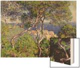 Bordighera, 1884 Wood Print by Monet Claude