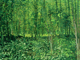 Woods and Undergrowth, c.1887 Wood Print by Vincent van Gogh