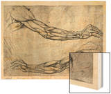 Study of Arms Wood Print by  Leonardo da Vinci