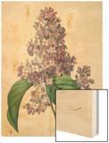 Lilacs Wood Print by Pierre-Joseph Redoute