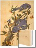 Blue Jay Prints by John James Audubon